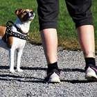 Posso sair à rua para caminhar ou passear com o cachorro?